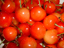 cherry-04a