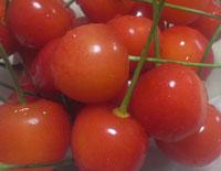 cherry2011
